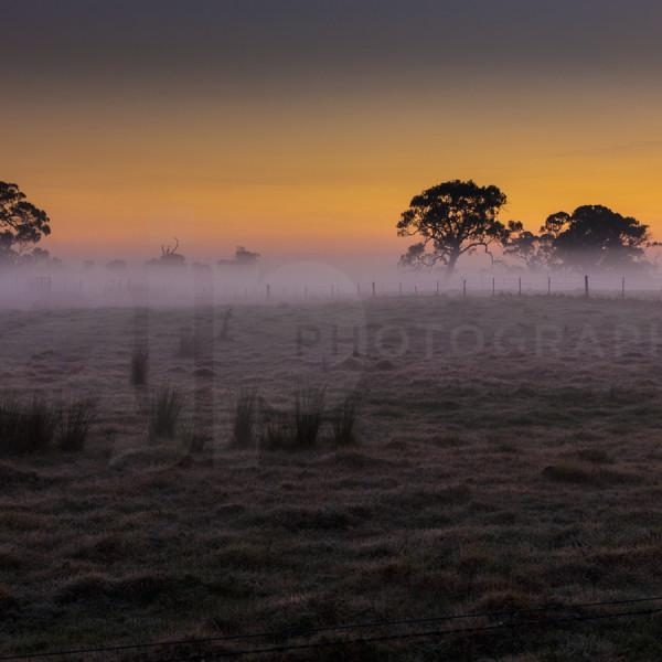 Mist on the field